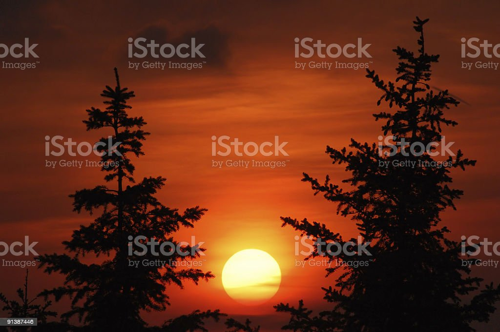 sunset and 2 fir royalty-free stock photo
