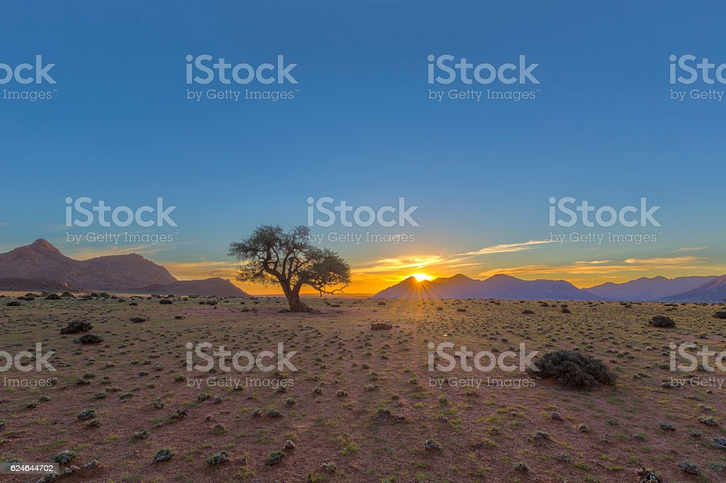 Sunset and a lone tree stock photo