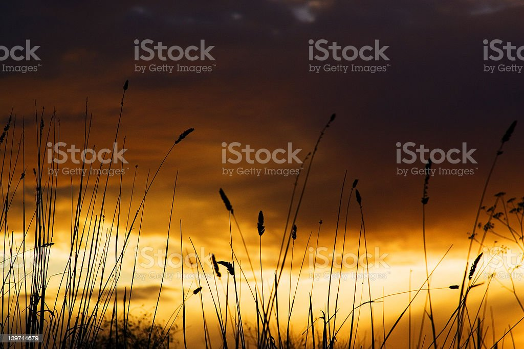 Sunset and Grass stock photo