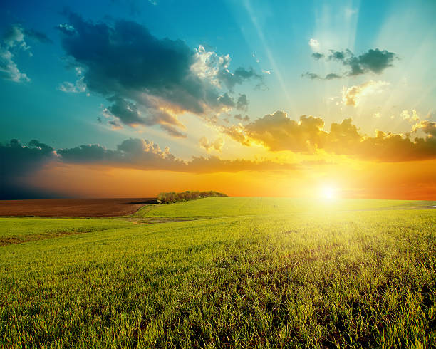 sunset and green field stock photo