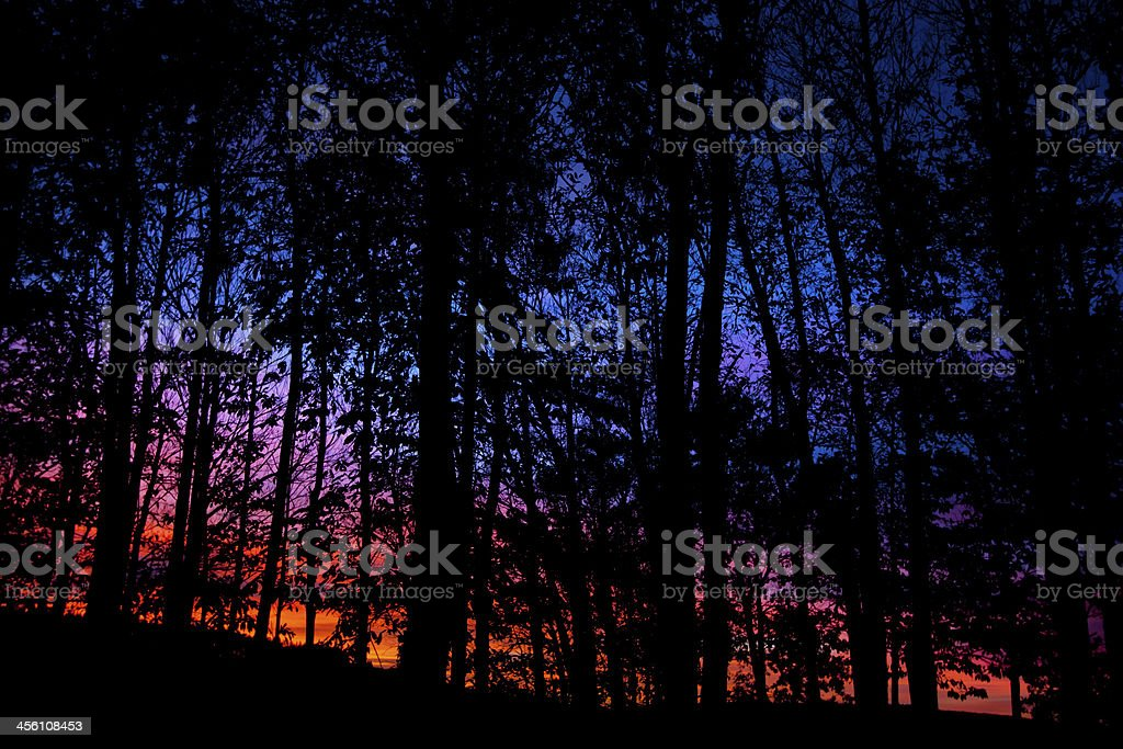 Sunset and leafless tree royalty-free stock photo