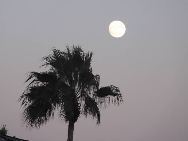 Full Moon Los Angeles Stock Photos, Pictures & Royalty-Free