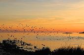 Flock of seagulls during beautiful sunset.