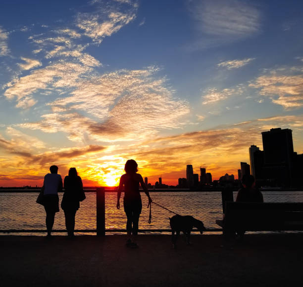 Sunset and Silhouette: Dog Walk stock photo