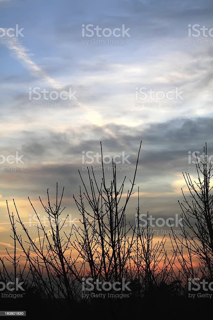 Sunset and silhouetted trees with jet trails royalty-free stock photo