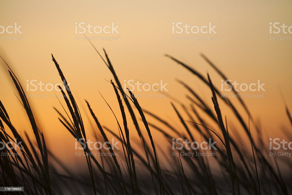 Sunset and spikes stock photo