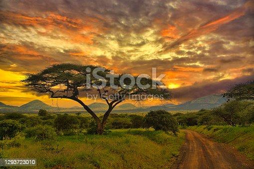 istock Sunset and sunrise in tsavo east Tsavo West and Amboseli National Park 1293723010