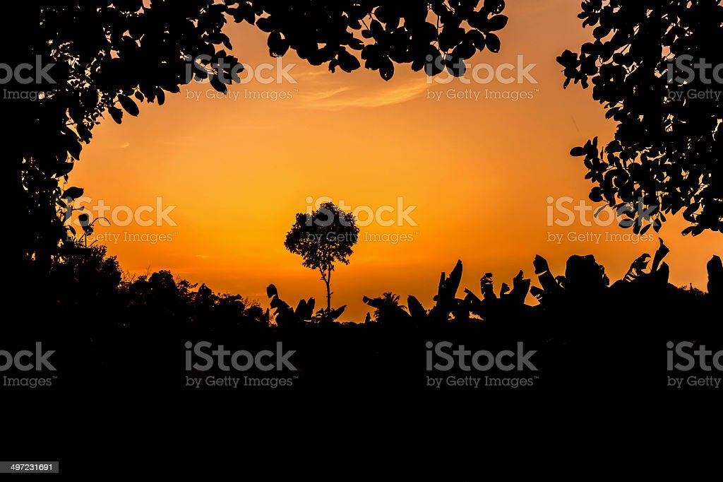 Sunset and Trees royalty-free stock photo