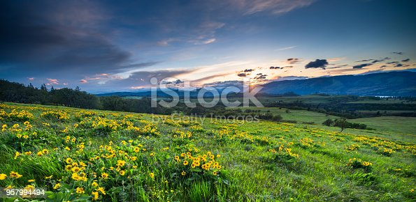 Sunset, USA, Columbia River Gorge, Blossom, Flower