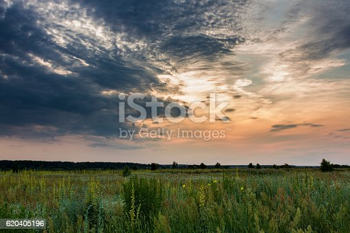 istock Sunset and wild meadow 620405196