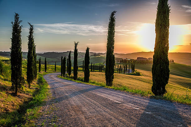 sunset and winding road with cypresses in tuscany - cipres stockfoto's en -beelden