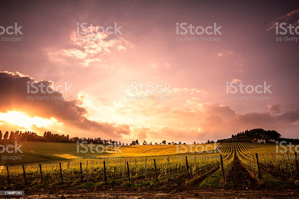 Sunset at a Chianti wine vineyard with trees in the distance royalty-free stock photo