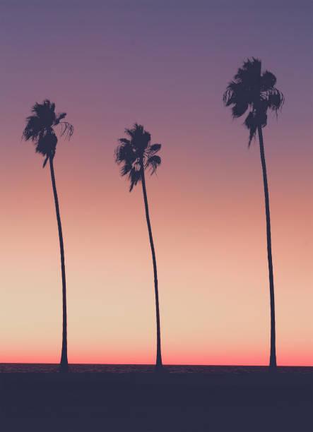sonnenuntergang am strand - süd kalifornien stock-fotos und bilder