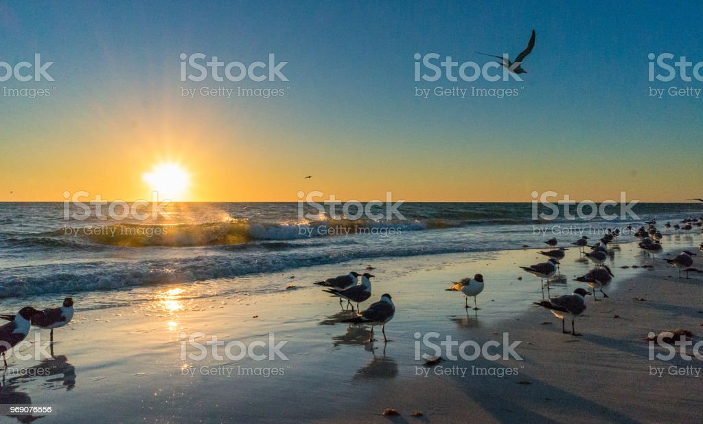 Sunset at Beach stock photo