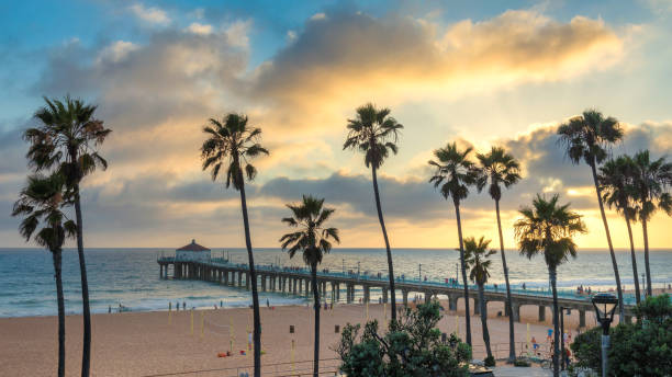 Sunset at California Beach Palm trees in Manhattan Beach and pier at sunset, Los Angeles, California. venice beach stock pictures, royalty-free photos & images