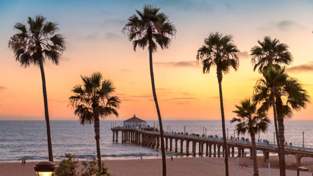 Sunset at Manhattan Beach and pier. Vintage processed Palm trees and Pier on Manhattan Beach at sunset in California, Los Angeles, USA. Vintage processed. venice beach stock pictures, royalty-free photos & images