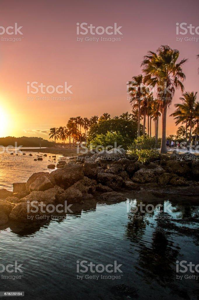 Sunset at Matheson Hammock Park stock photo