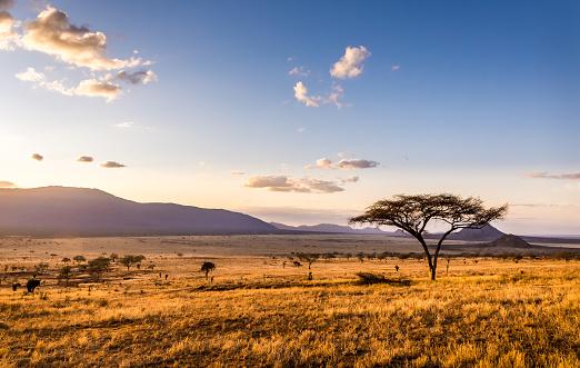 Amazing sunset at savannah plains in Tsavo East National Park, Kenya