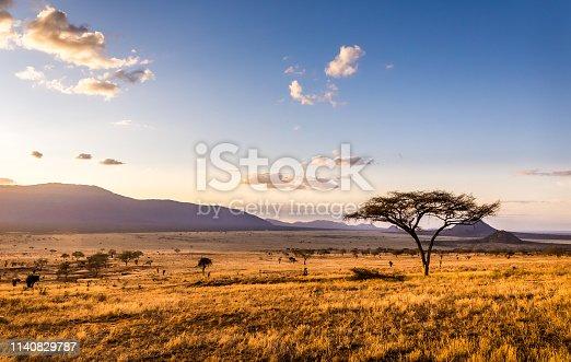 istock Sunset at savannah plains 1140829787