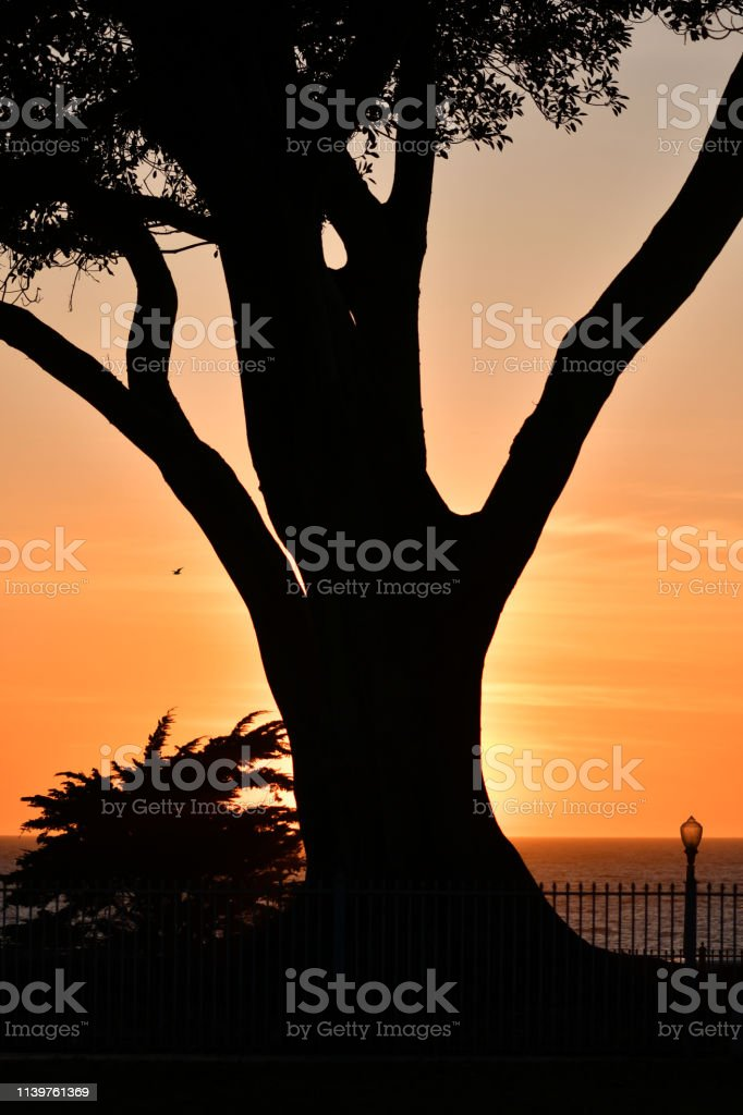 Sunset at Seaside Park with Tree stock photo