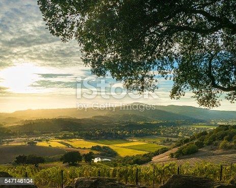 istock Sunset at Sonoma California patchwork vineyard at harvest 547146104