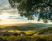 Tranquil vineyard landscape