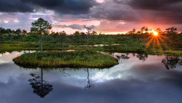 Sunset at swamp stock photo