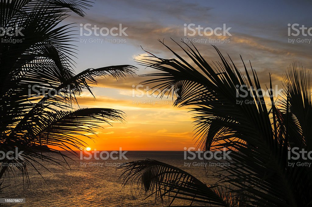 Sunset at the beach framed by palm leaves stock photo
