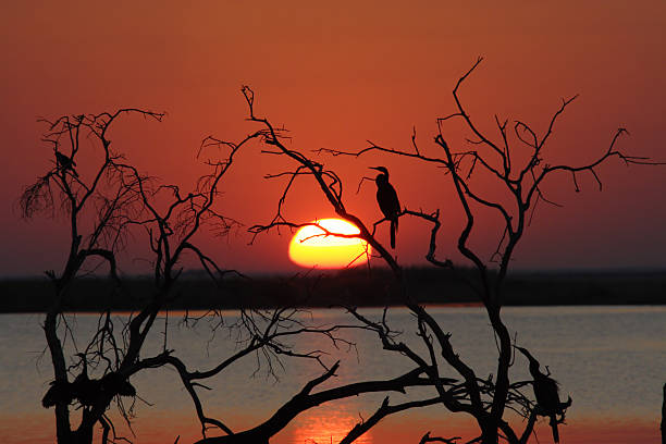 Sunset at the Chobe river stock photo