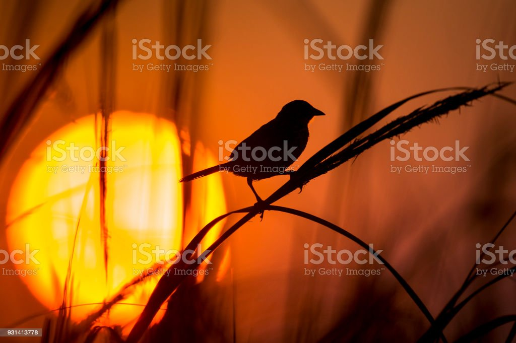 Sunset at the Marsh stock photo