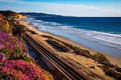 Sunset at the Terry pine and Del Mar beach, spring,  San Diego, CA
