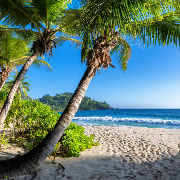 Sunset at tropical Sunny beach with palm trees and turquoise sea. stock photo