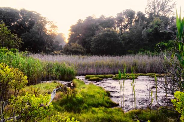 Sunset at wetlands near Nantucket Sound, Cape Cod, Massachusetts, New England, USA stock photo