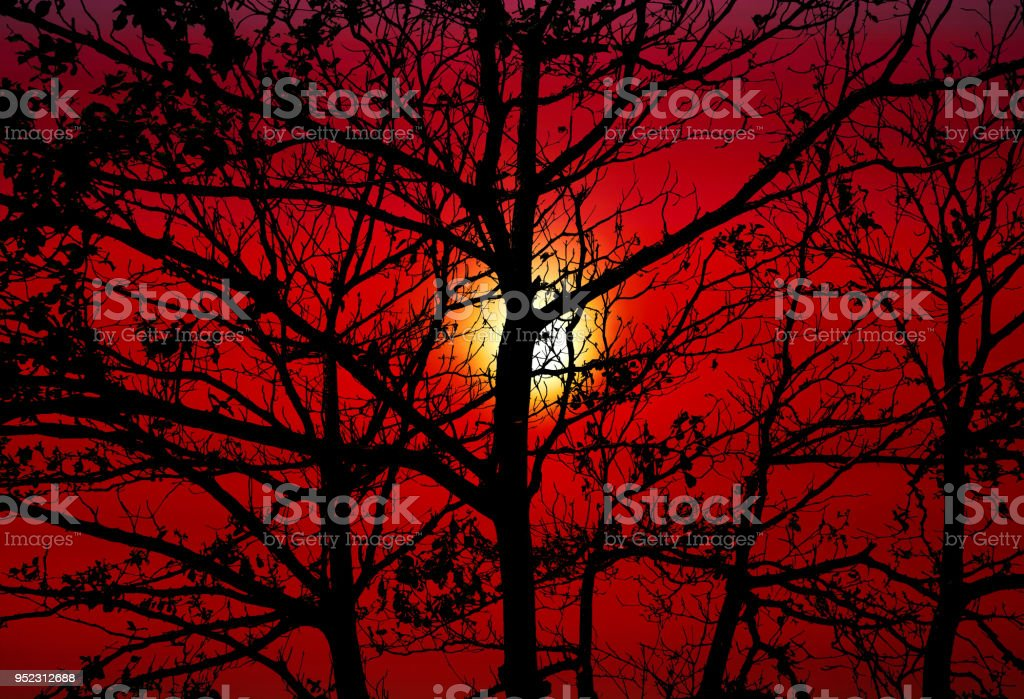 zonsondergang terug silhouet boom donker oranje hemel foto