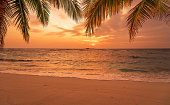 Sunset beach with palm leaves