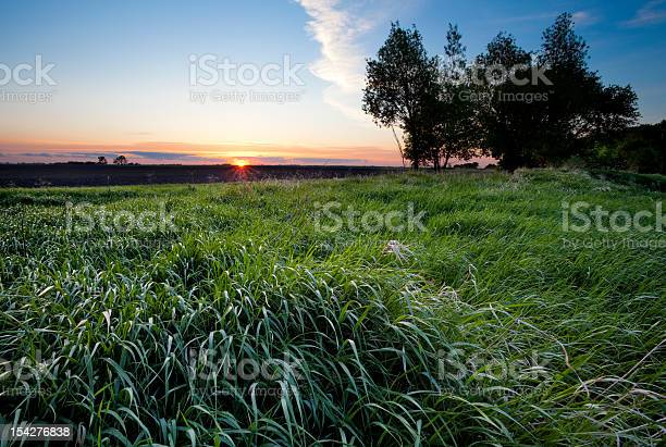 Sunset behind a large field and trees