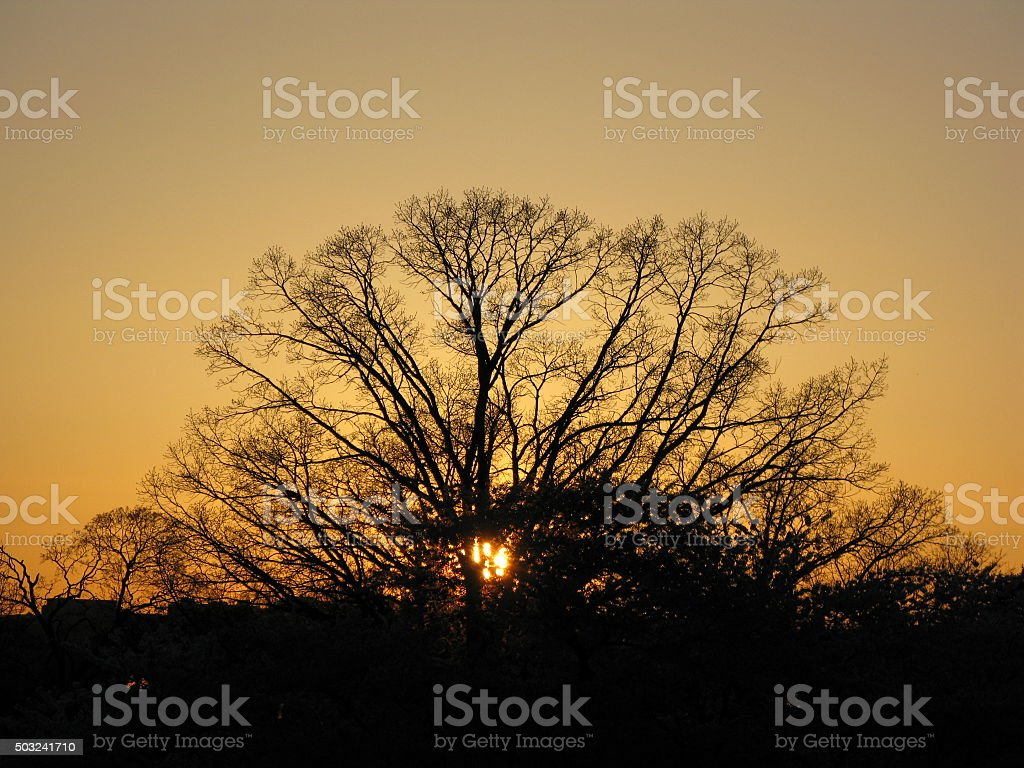 Sunset Behind a Lone Tree stock photo