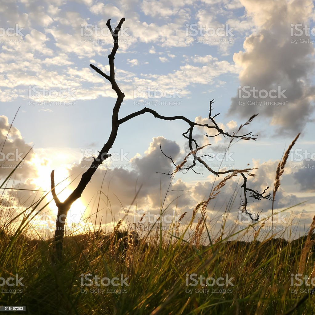 Sunset behind a tree royalty-free stock photo