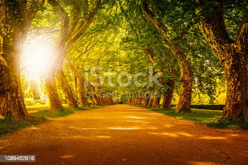 sunset behind beautiful alley with huge trees