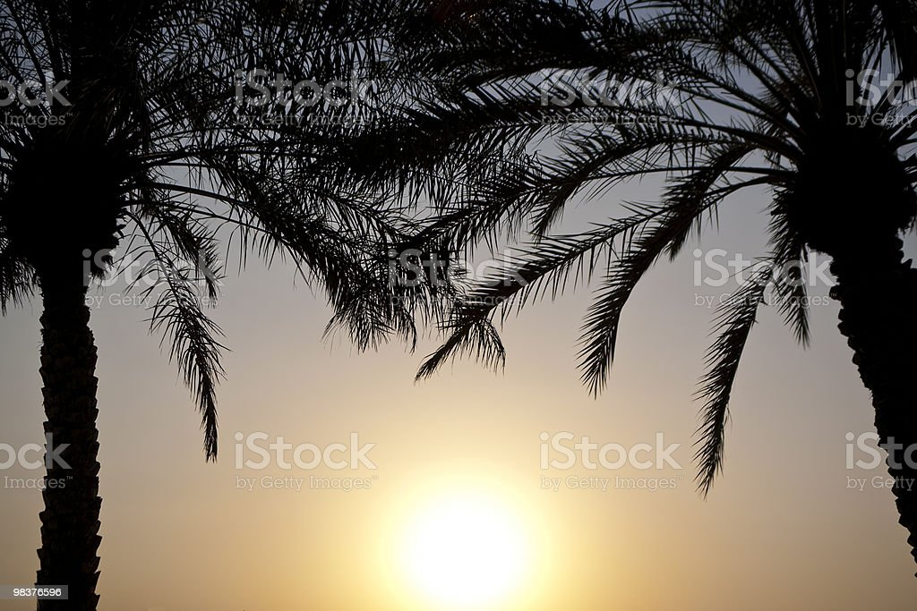 Sunset Behind Palm Trees royalty-free stock photo