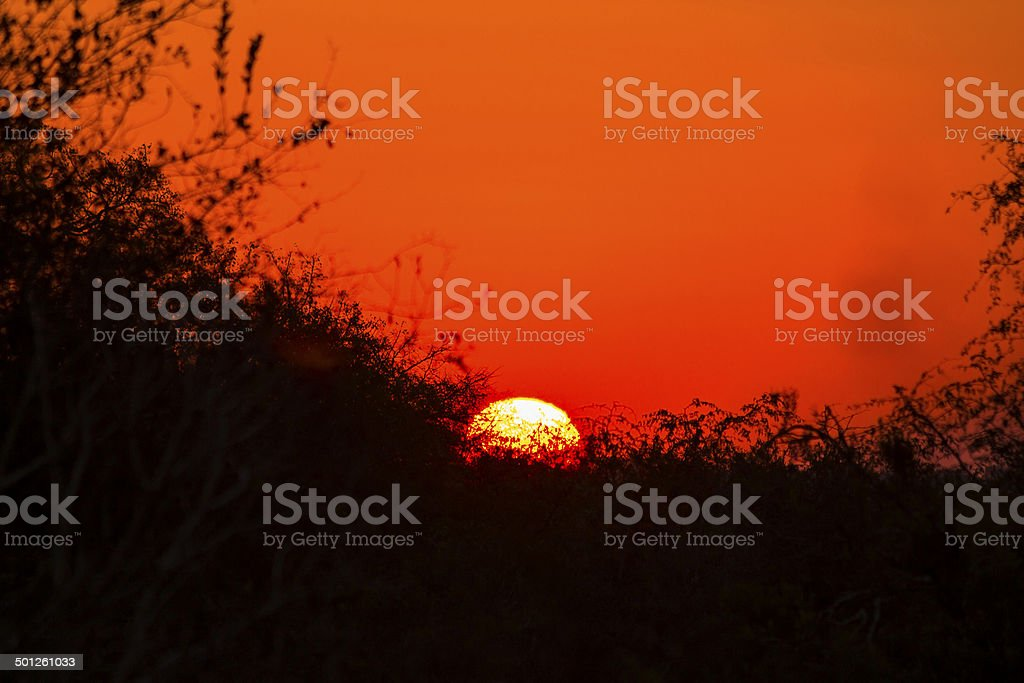 Sunset behind silhouetted trees stock photo