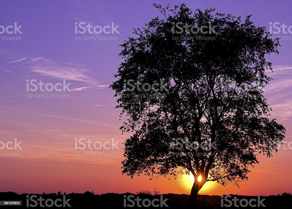 Tramonto dietro l'albero foto stock royalty-free