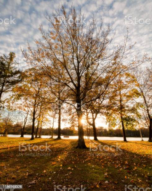 Photo of Sunset behind young trees with golden fall colored leaves, casting long shadows on the park grass.