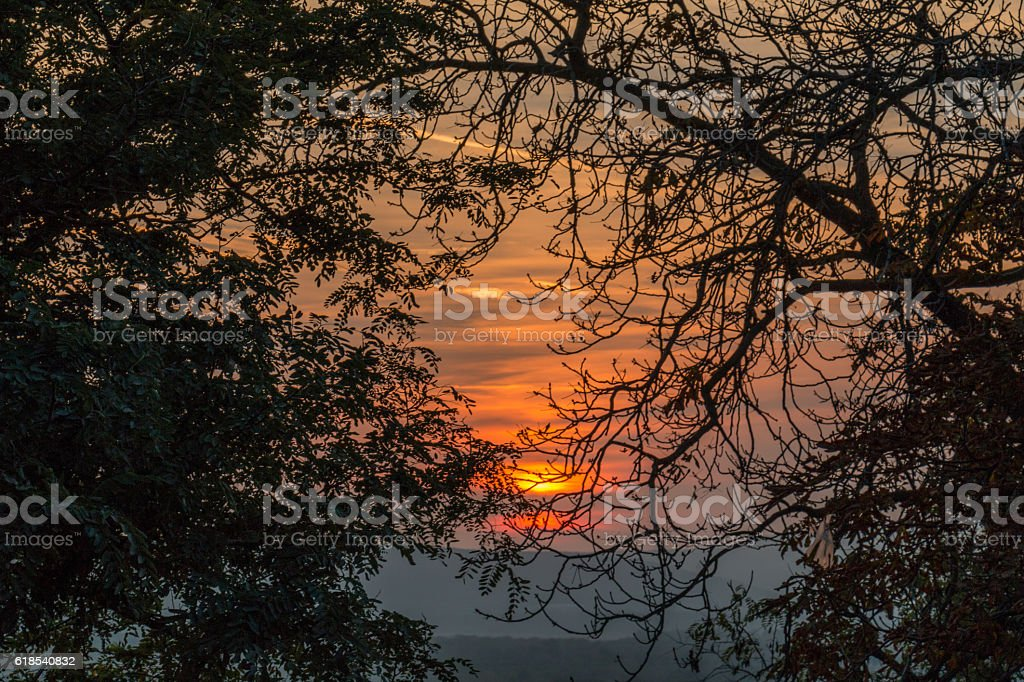 Sunset between trees stock photo