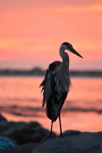 Sunset Birds on the Beach stock photo