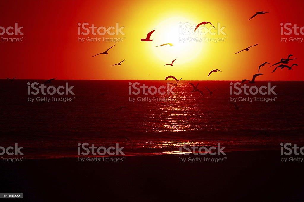 Sonnenuntergang Vögel Lizenzfreies stock-foto