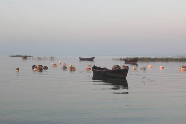 sunset ,boats ,sea and stork stock photo