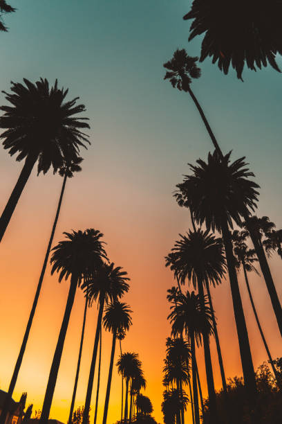 sunset boulevard in los angeles sunset boulevard in los angeles sunset boulevard los angeles stock pictures, royalty-free photos & images