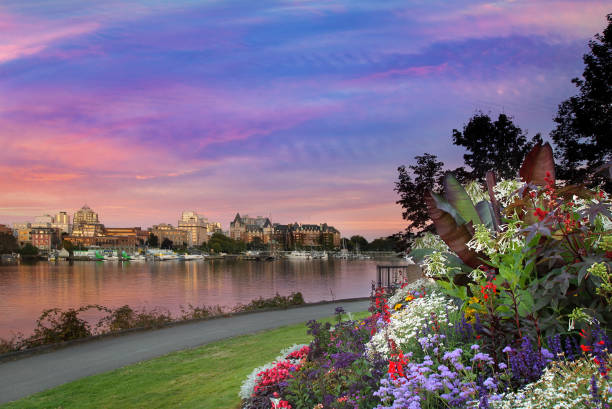 sunset by the park at victoria british columbia canada innter harbour - british columbia stock pictures, royalty-free photos & images