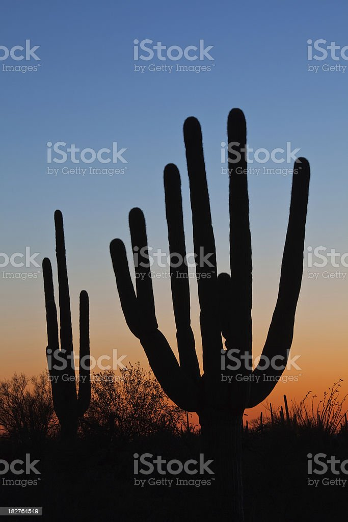 Sunset Cactus royalty-free stock photo